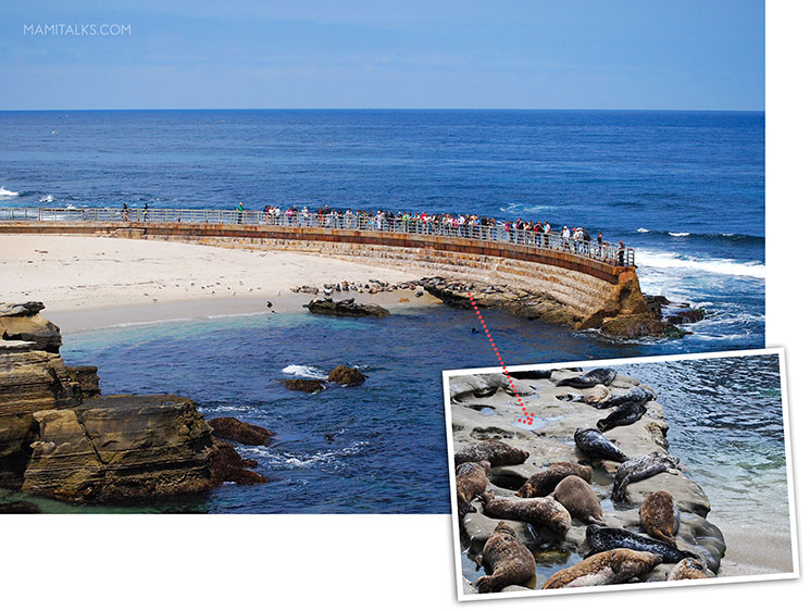 La Jolla Seals, Children's pool -MamiTalks.com