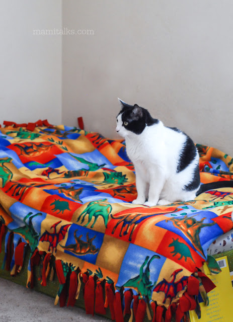 Kitty_on_the_bed