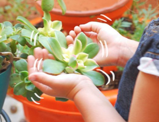 Little girl touching a succulent