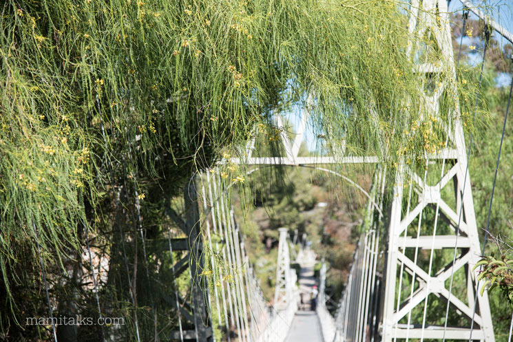 Hidden suspension bridge in San Diego -MamiTalks.com