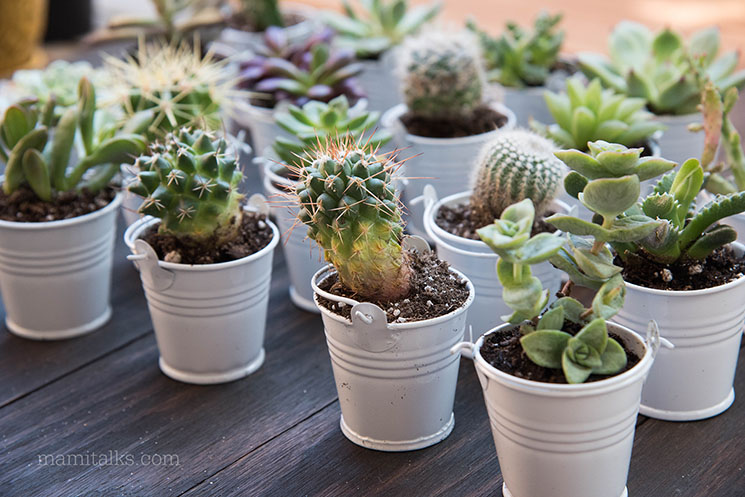 Mini cactus for favors -MamiTalks.com