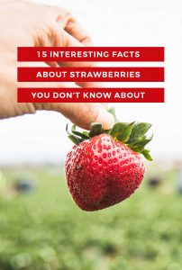 Learn 15 interesting facts about strawberries, health benefits, CA farming and more! You will be eating more strawberries than ever before! -MamiTalks.com