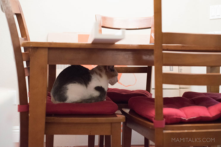 Kitty sitting in a chair under the table -MamiTalks.com