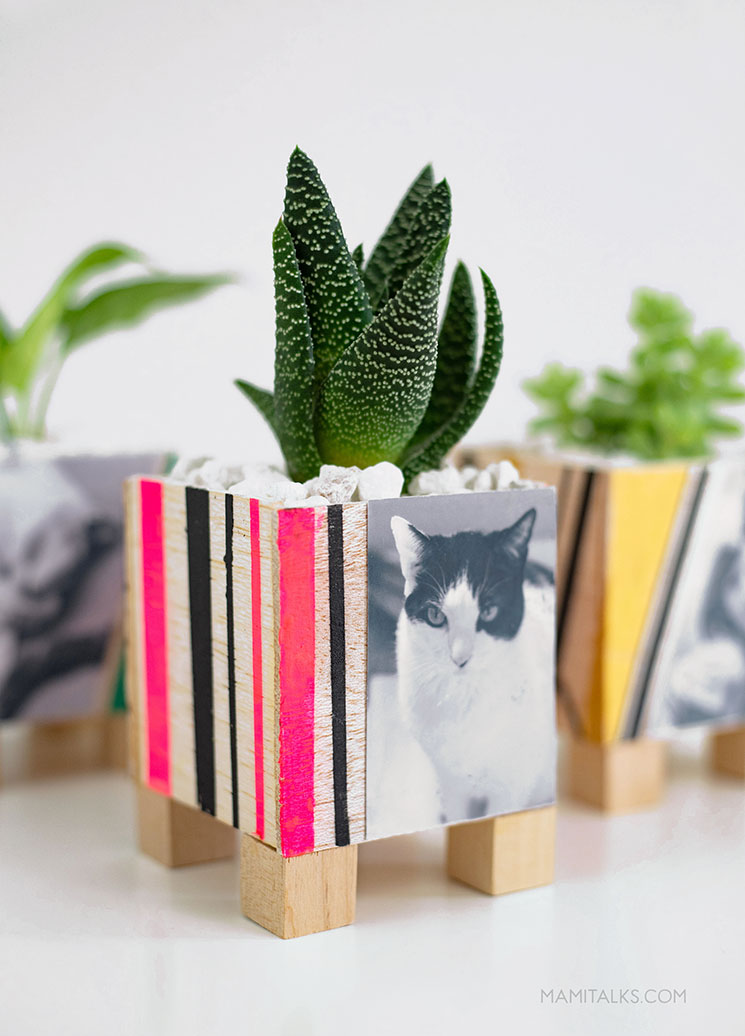 Photo planters with balsa wood, photos of pets. MamiTalks.com