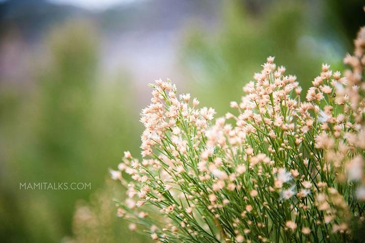 Beautiful nature. -MamiTalks.com