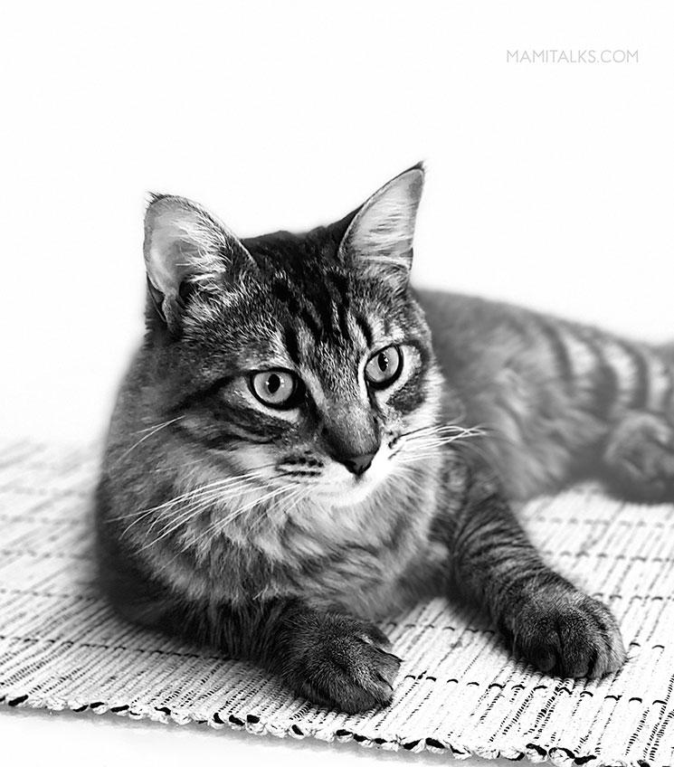 Foto de gato en blanco y negro. -MamiTalks.com