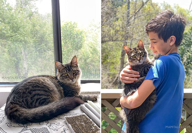 Gatico en ventana, niño con gato. -Mamitalks.com