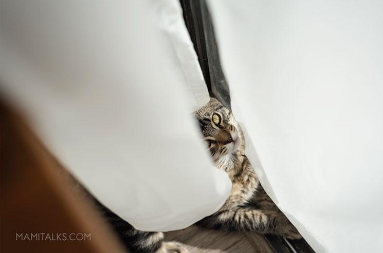 Our new kitty behind curtains -MamiTalks.com